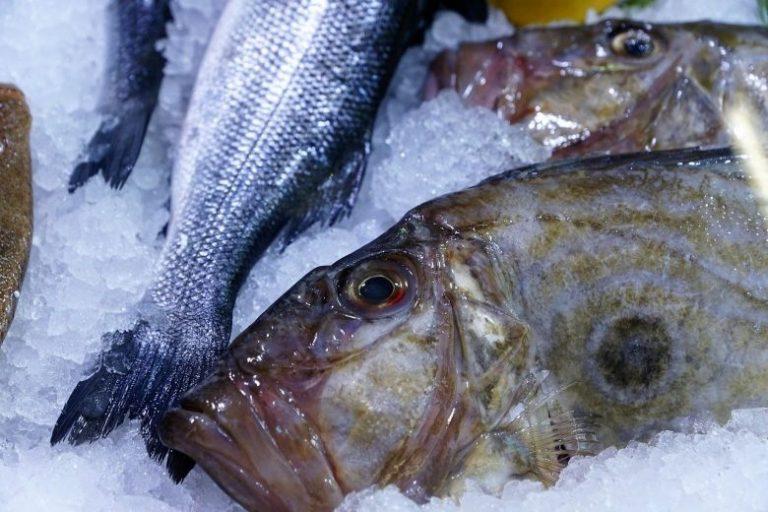 Mengenal Habitat Ikan Dori dan Keistimewaannya